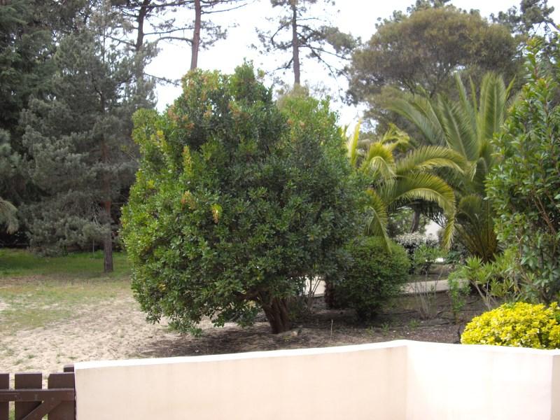 appartement en location saisonnière avec extèrieur Cap Ferret