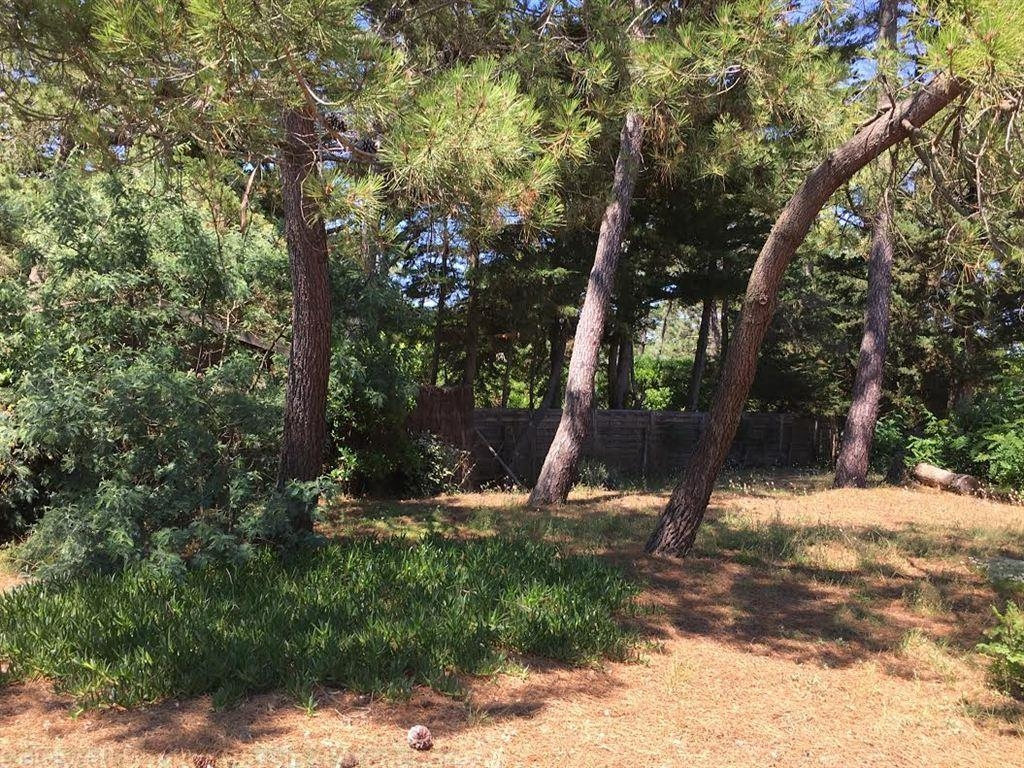 grand terrain constructible à vendre au Cap Ferret Bassin Arcachon
