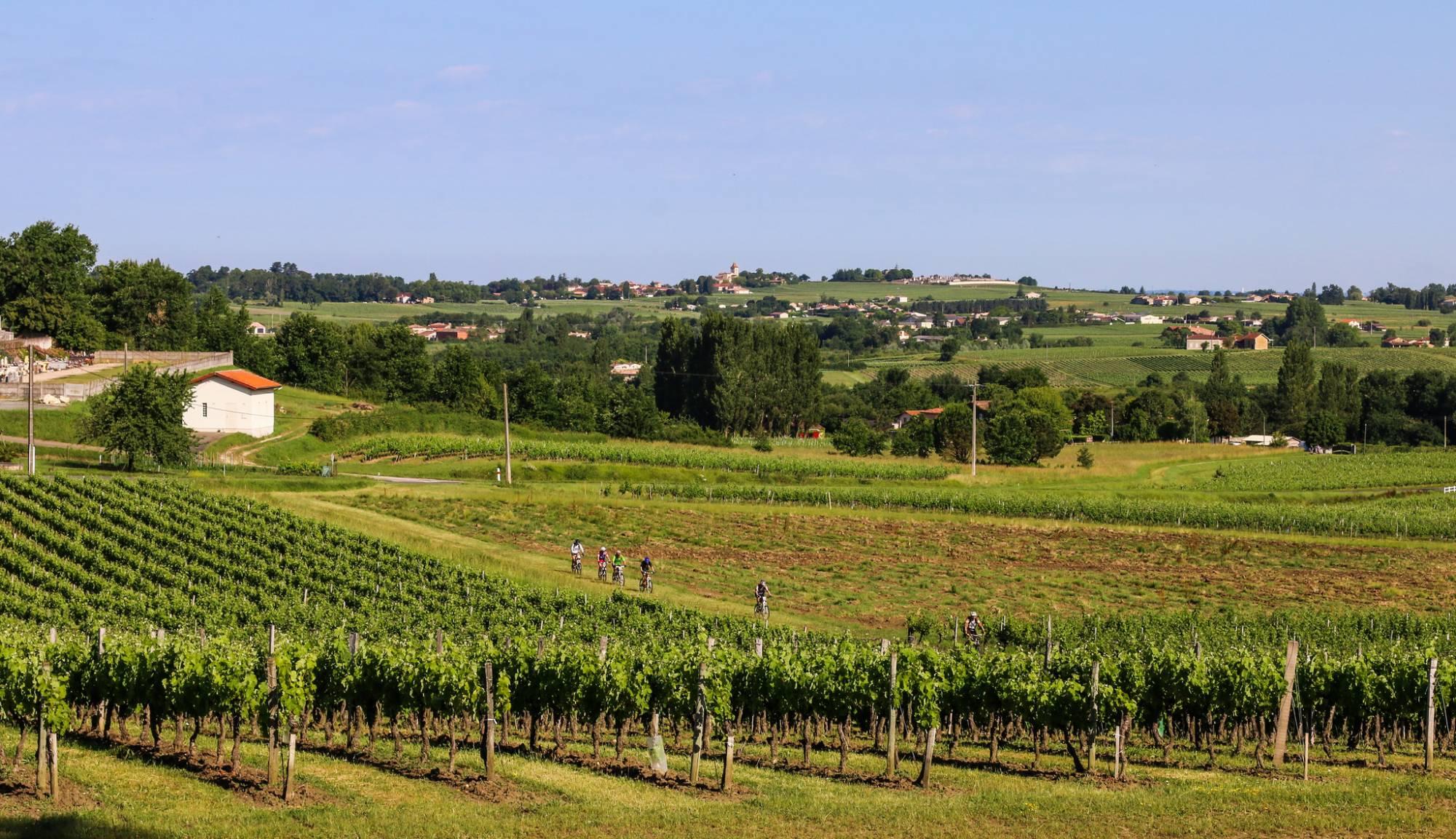l'histoire du vignoble bordelais