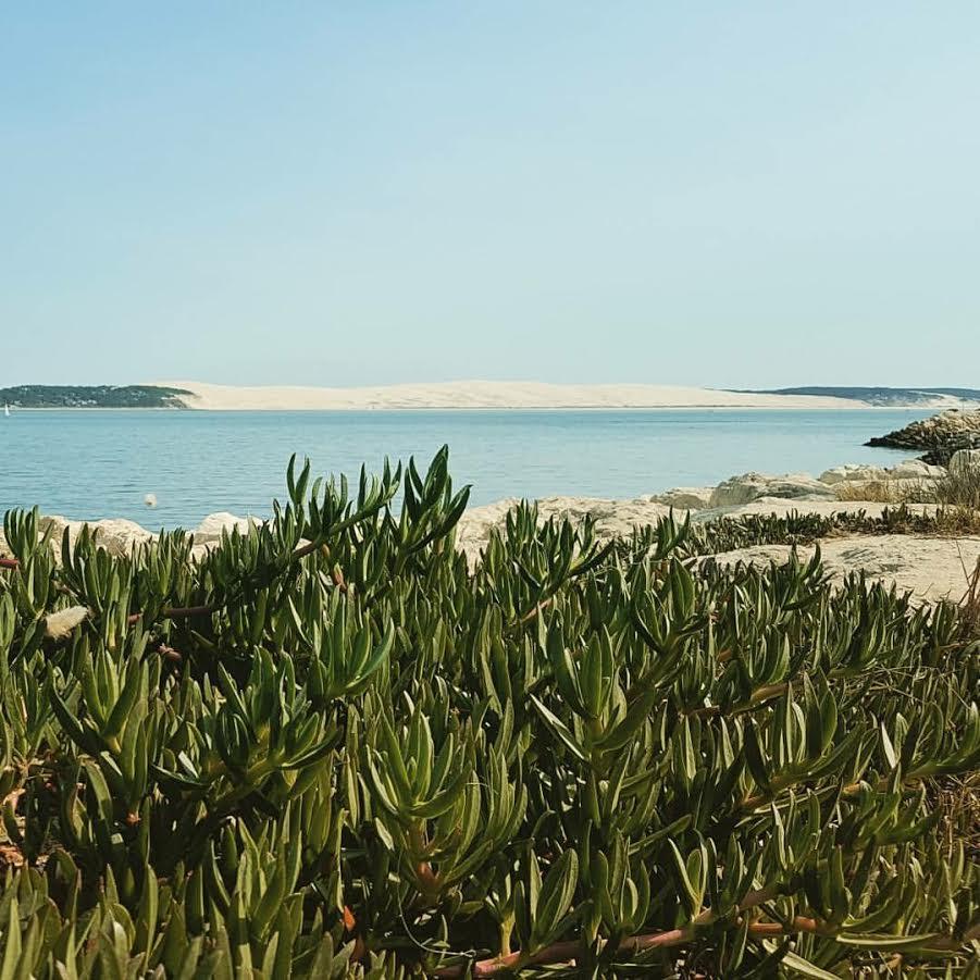 villa à louer cet été vue bassin au cap-ferret