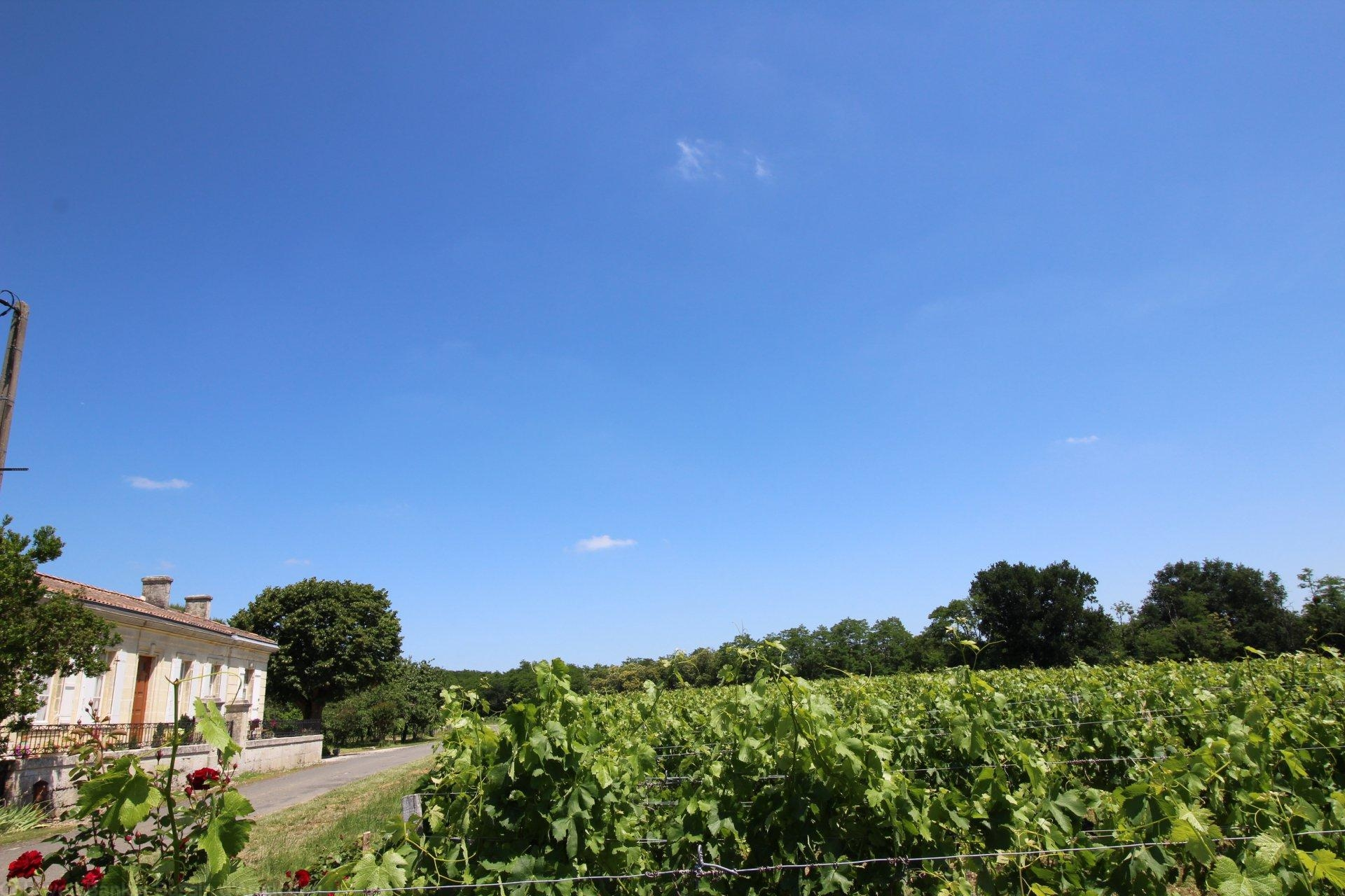 Acheter propriété viticole composée de 2 maisons en blayais saint ciers de canesse