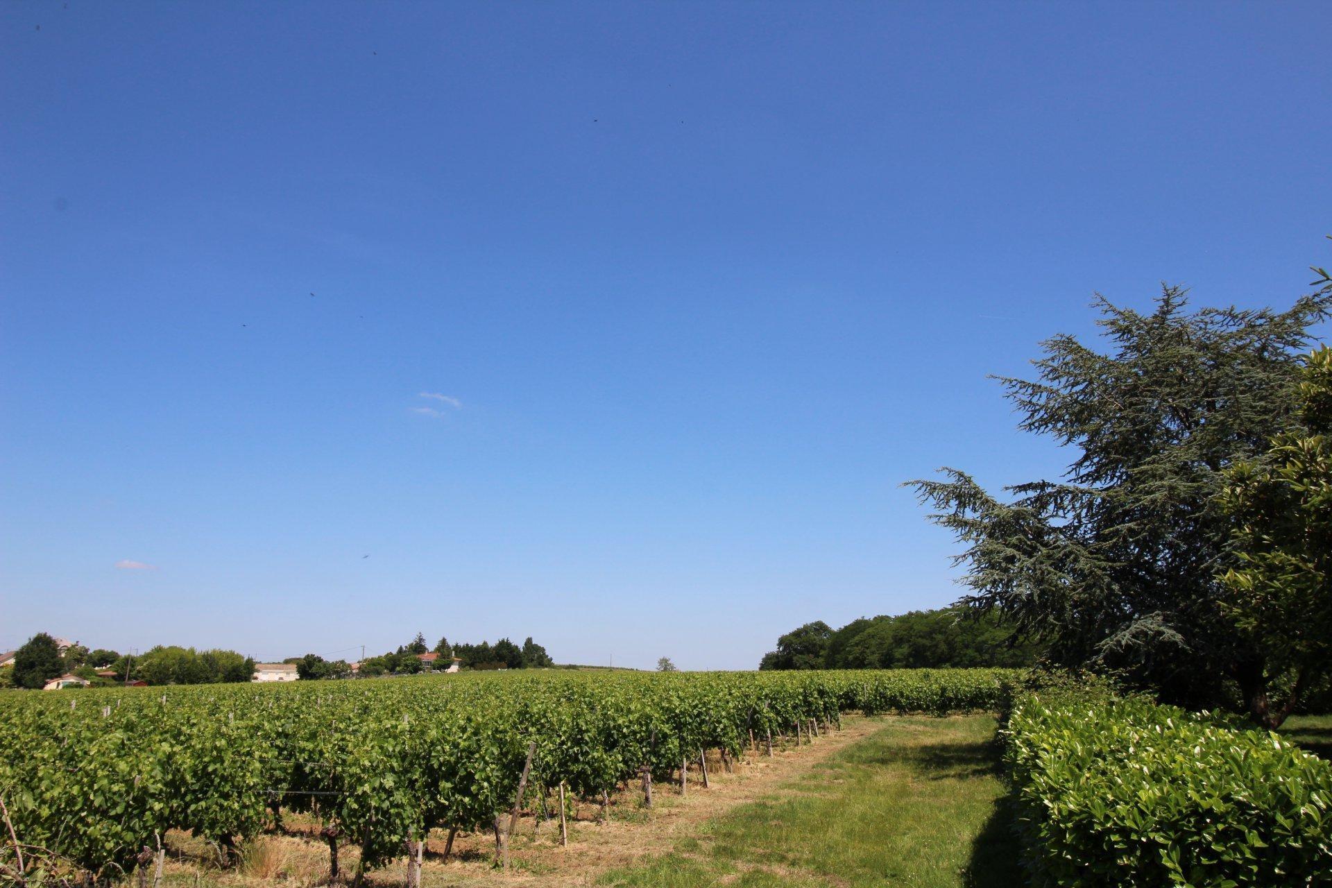 Recherche propriété viticole en blayais saint ciers de canesse