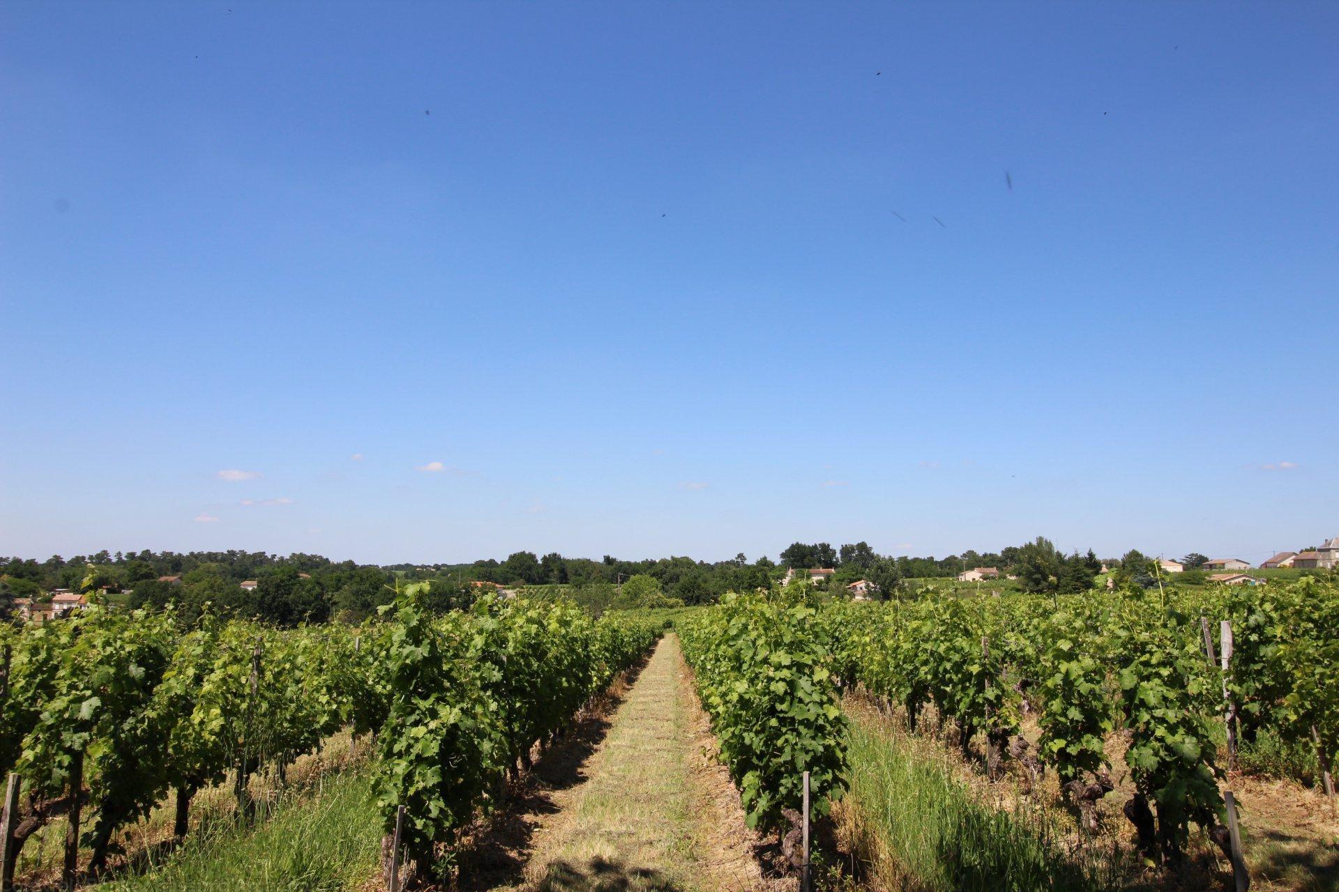 propriété viticole composée de 2 maisons en blayais a vendre saint ciers de canesse