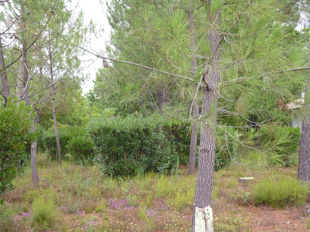 Lege Cap Ferret terrain constructible à vendre