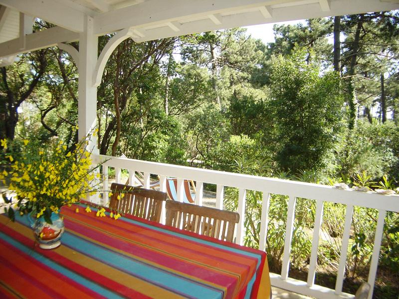 villa entourée des pins et proche du bassin à louer cet été au Cap-Ferret