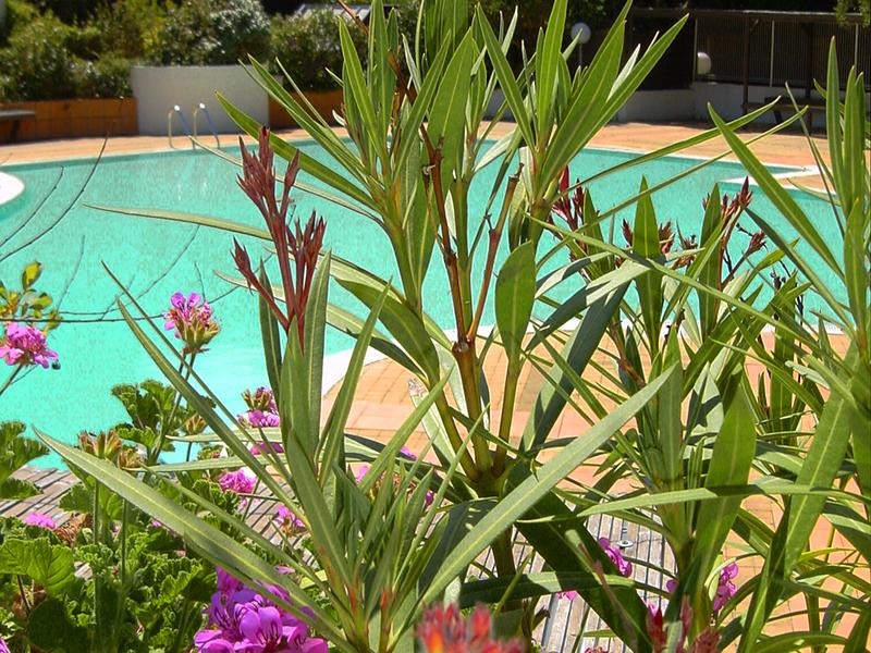Location saisonnière centre cap-ferret résidence avec piscine appartement pour 4