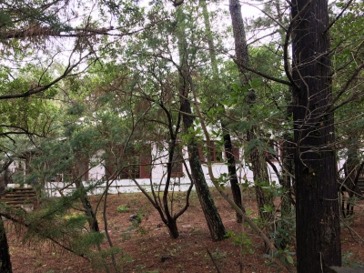 CAP FERRET - 44 HA villa landaise à vendre - 4 chambres sur un grand terrain