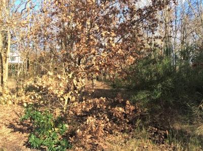 Vente terrain constructible proche bordeaux le taillan medoc