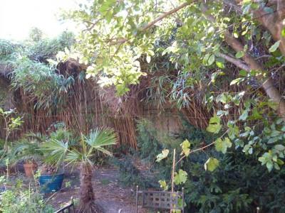 jardin verdoyant arcachon quartier animé