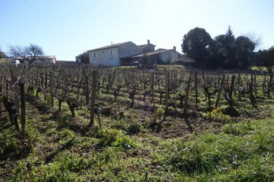 propriété viticole rénovée en vente  avec 5 chambres à louer Fronsac